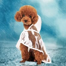 8750208-Warrior hoopet teddy bear puppy transparent four-legged raincoat small dog waterproof clothing dog clothes beautiful transparent waterproof raincoat XL-bust 46-50cm on JD